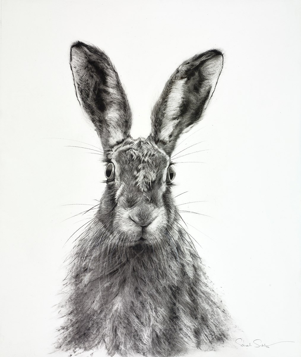Surprise, Surprise! by sarah stokes -  sized 22x26 inches. Available from Whitewall Galleries